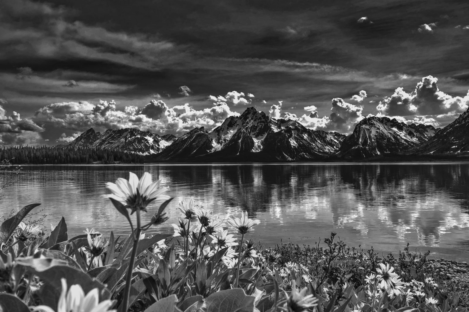 Calm Spring in the Tetons