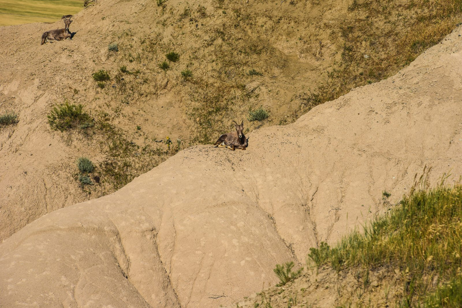 Hanging Out in the Badlands