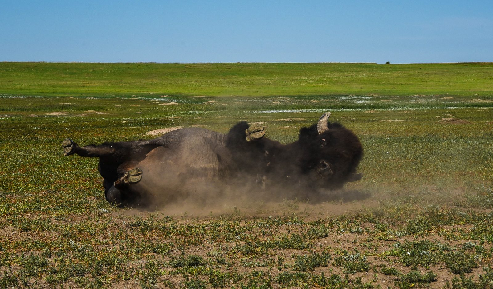 Scratching an Itch in the Badlands