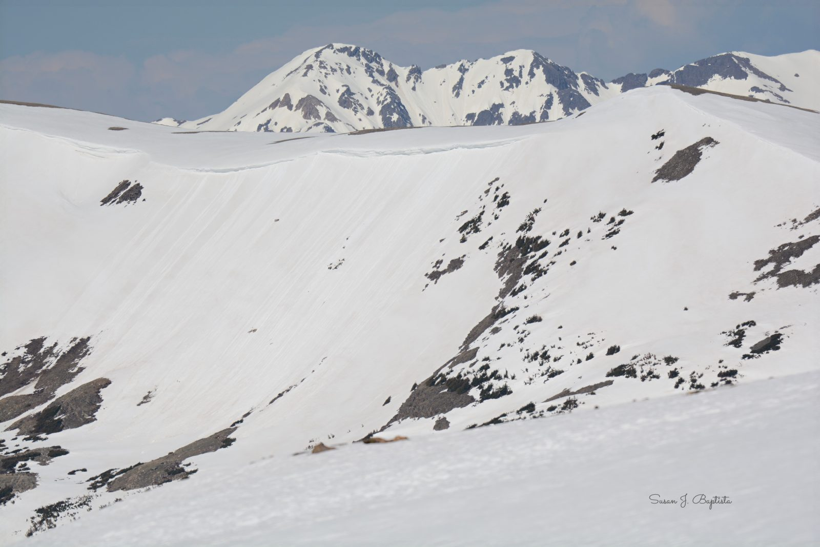 Early Summer  Top of Trail Ridge Road