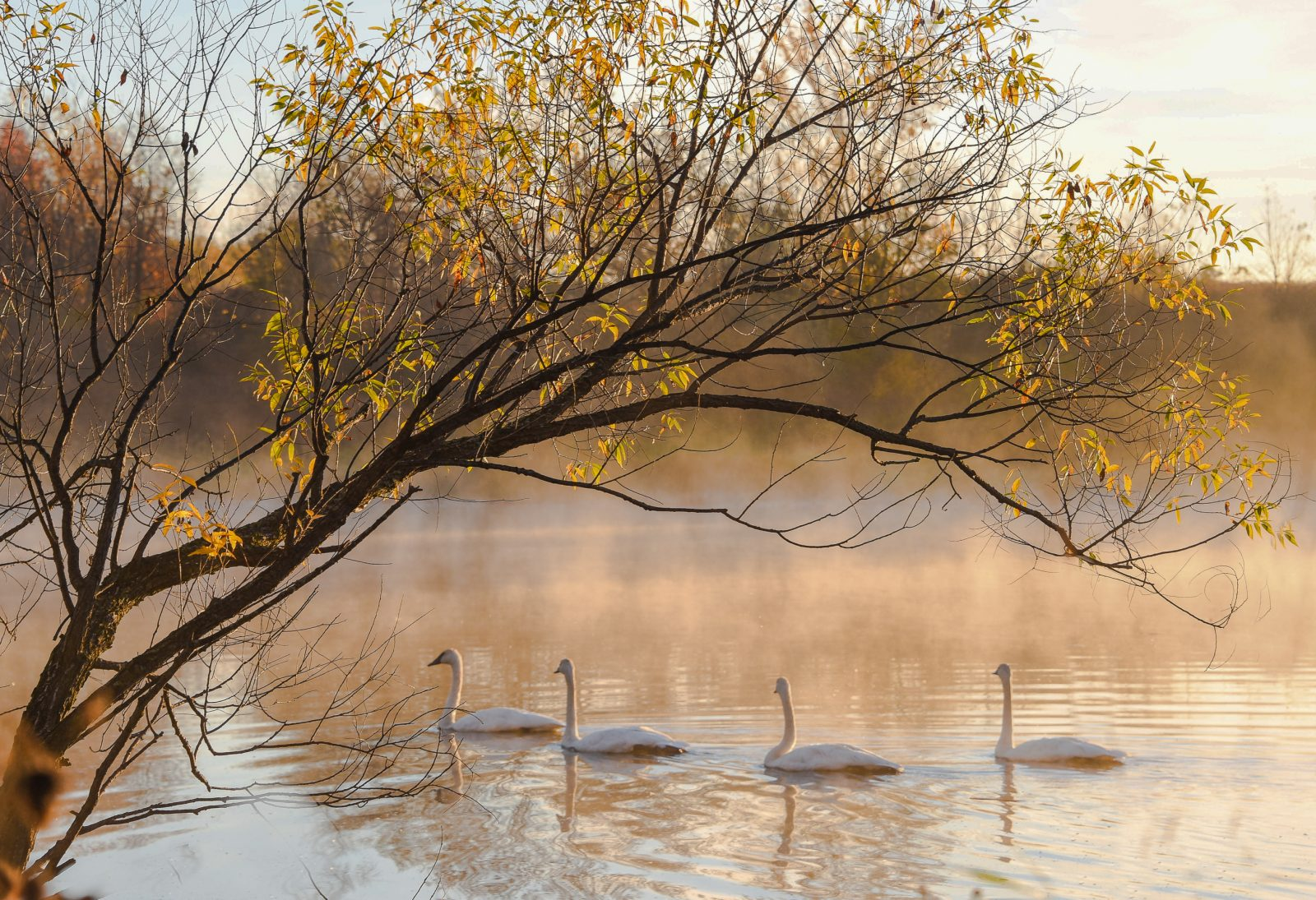 Autumn morning on the Pond