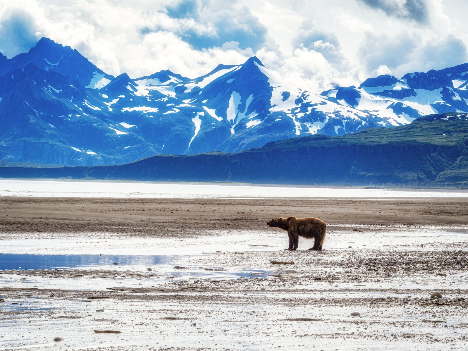 Long Grizzly on the Beach