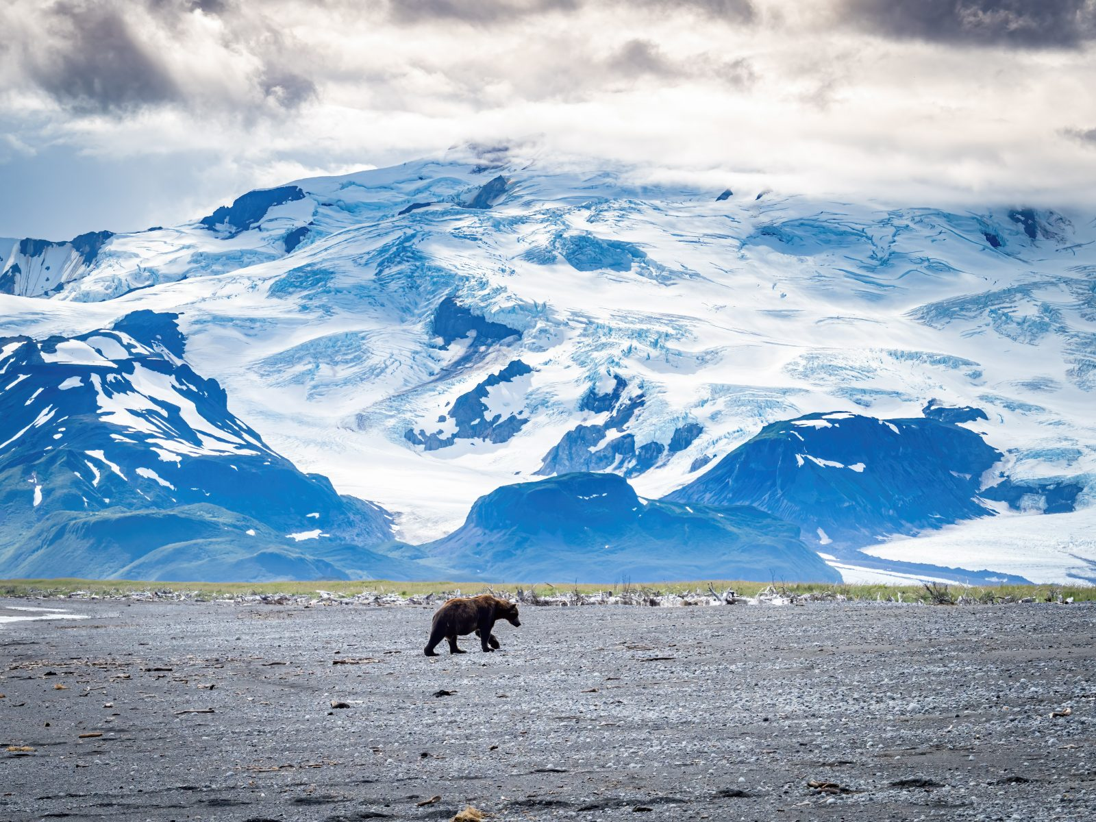 Lone Grizzly