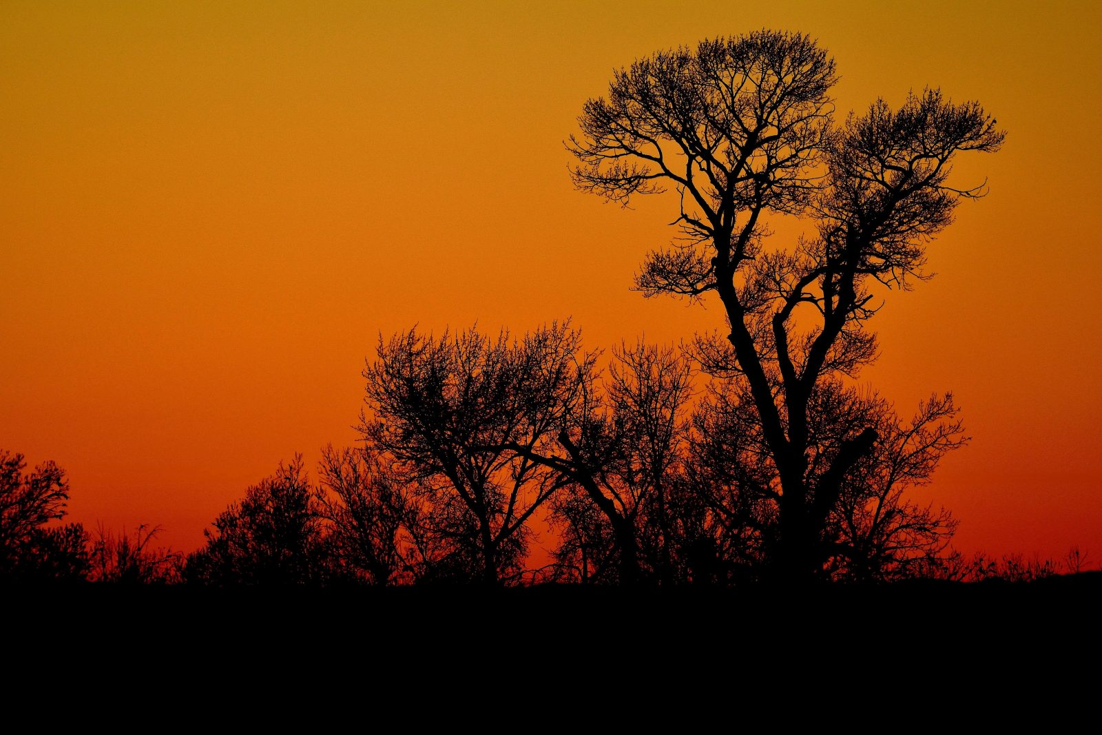 Sunset and Silhouette