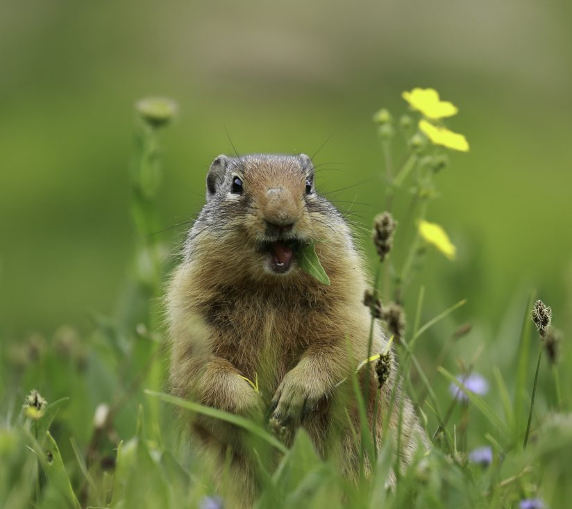 Chow Time In The Meadow