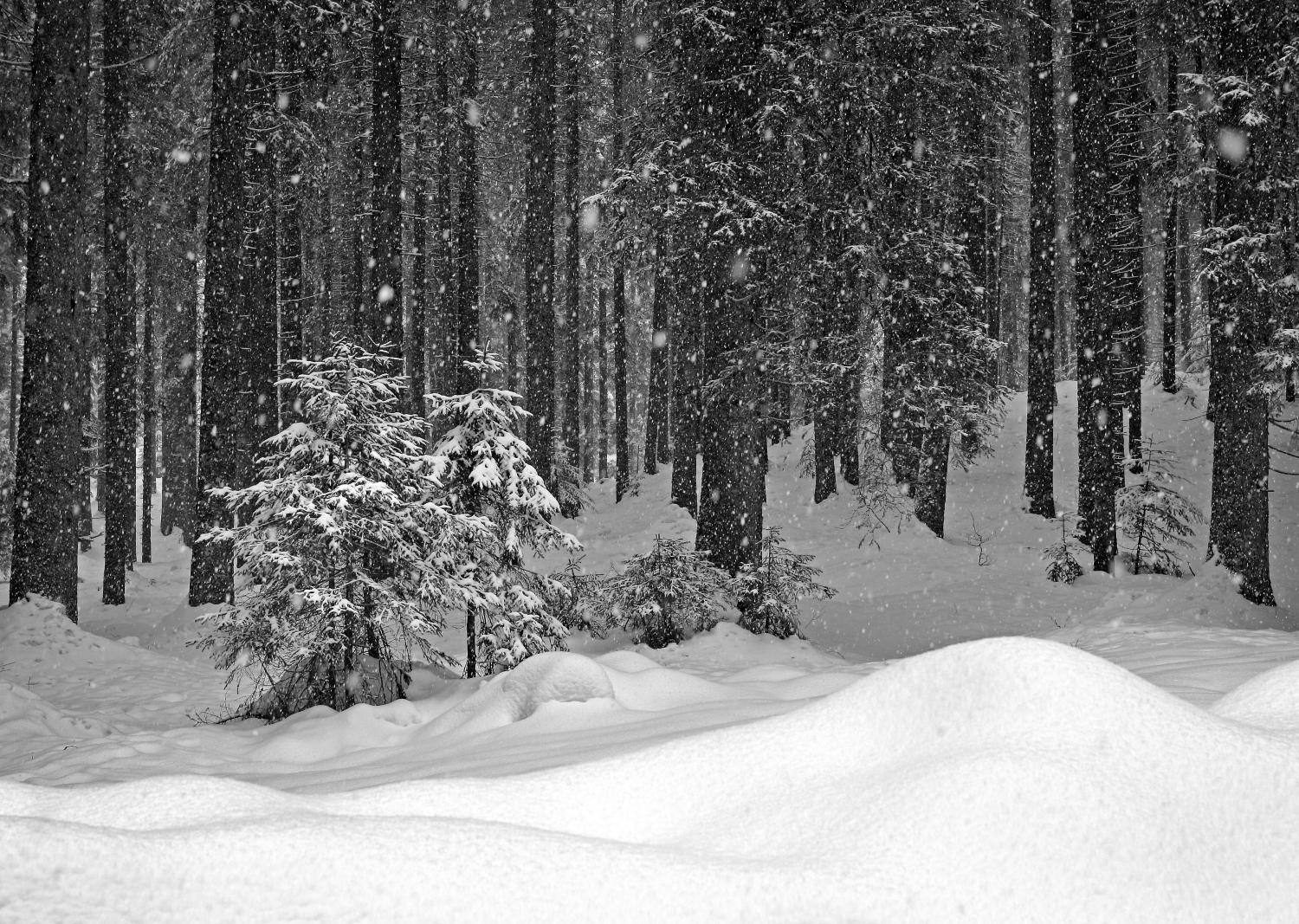 Heavy snow in the woods