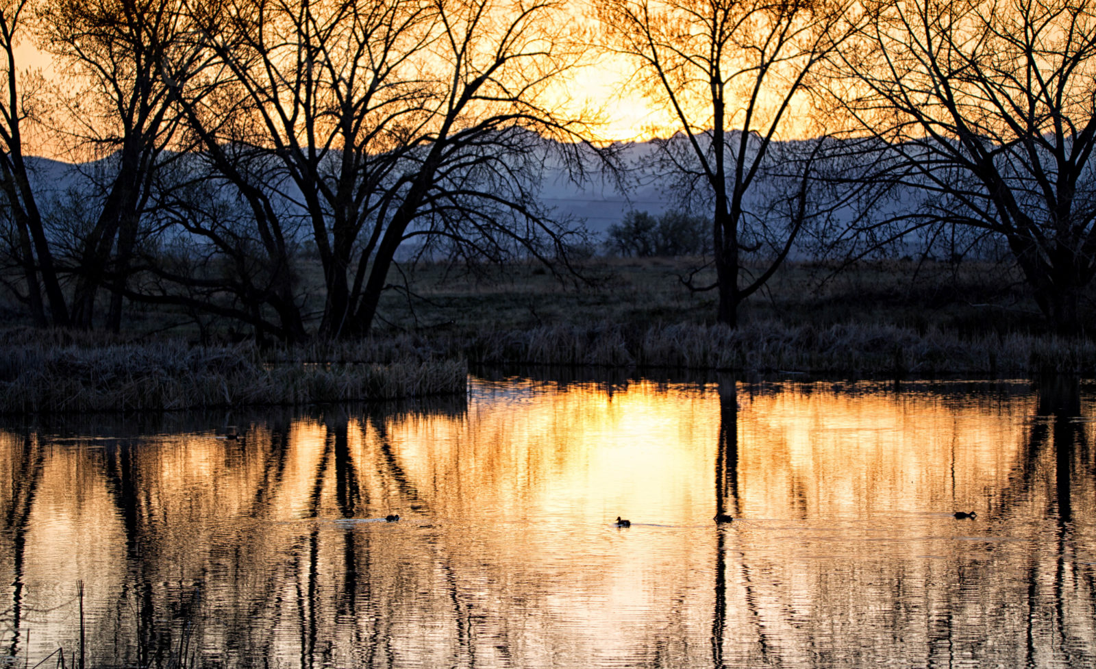 A Quiet Pond At Sunset