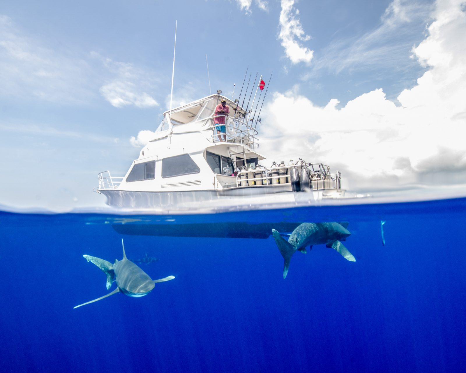 Oceanic White Tip Sharks Circling a Boat