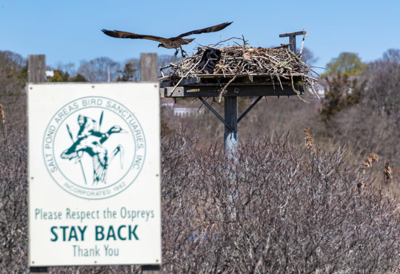 Osprey – Protected