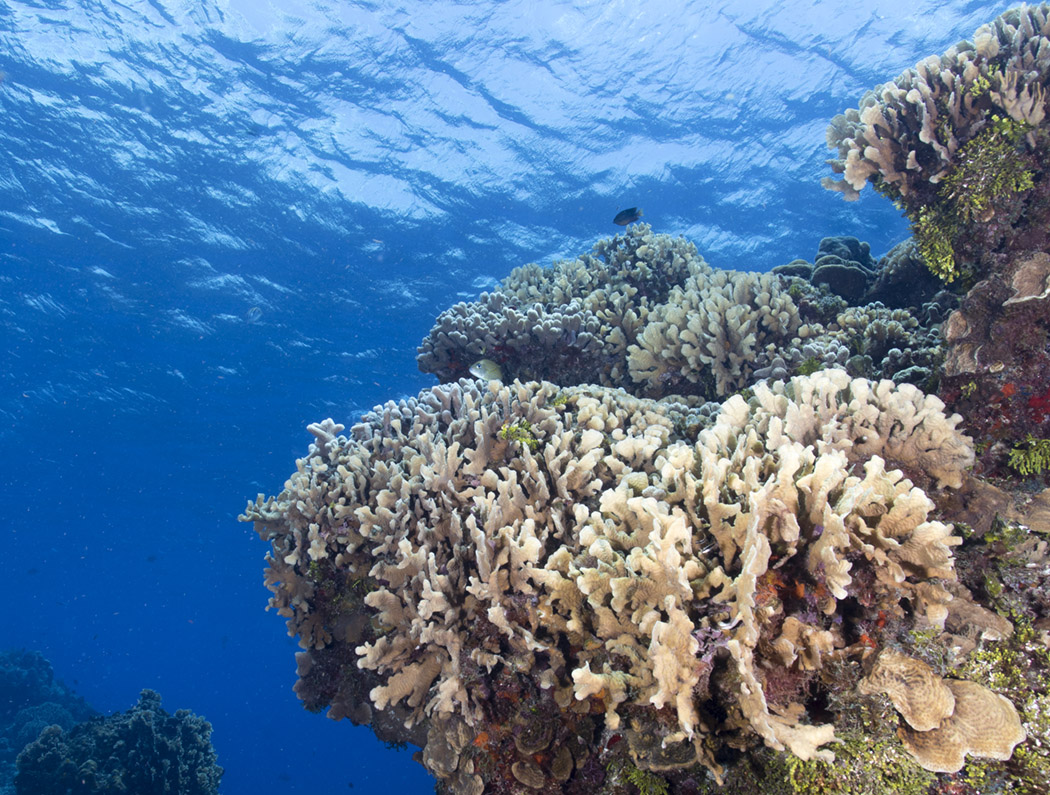 Columbia Reef – Cozumel Mexico