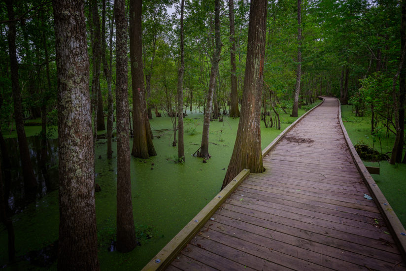 A Path through the Swamp