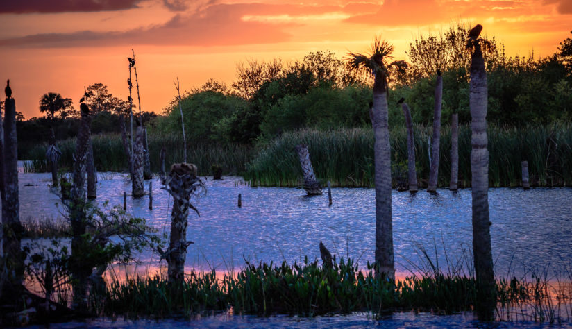 Sunset at The Wetlands