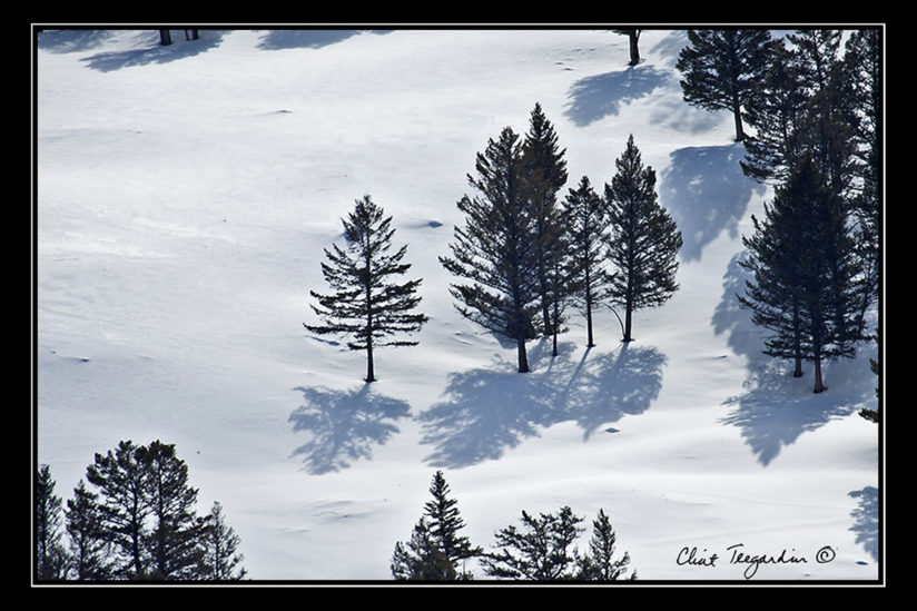 Three Trees in Yellowstone National Park