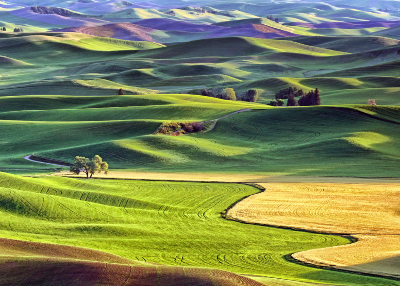 Palouse Afternoon