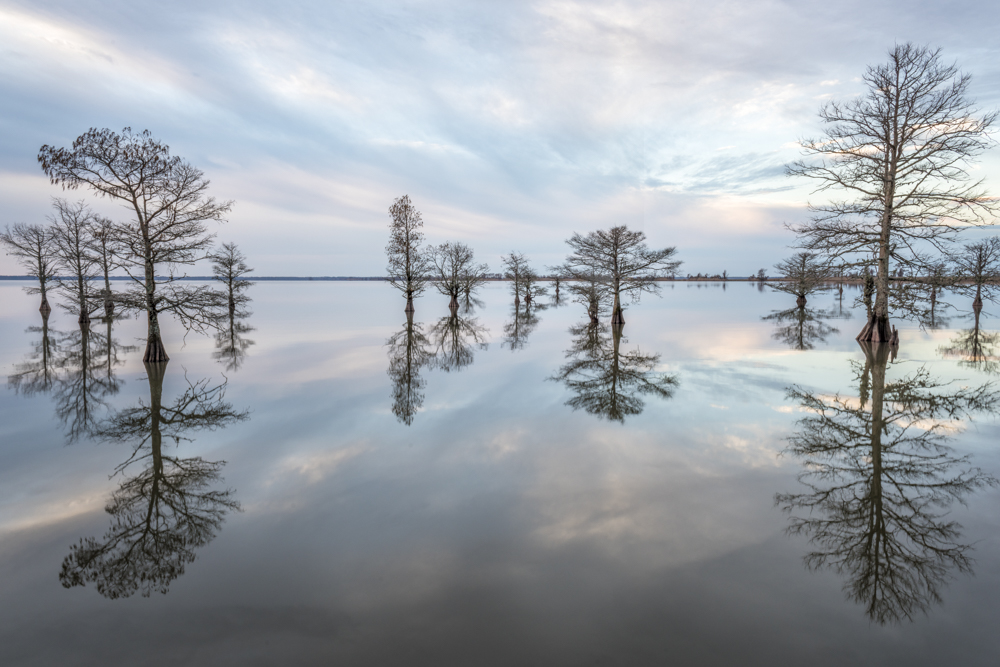 Reflections at Lake Mattamuskeet