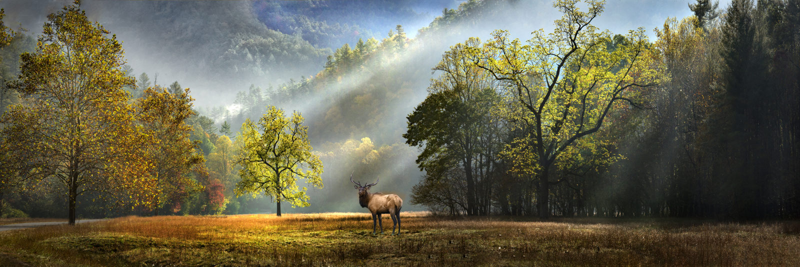 Morning At The Elk Rut – Cataloochee Valley