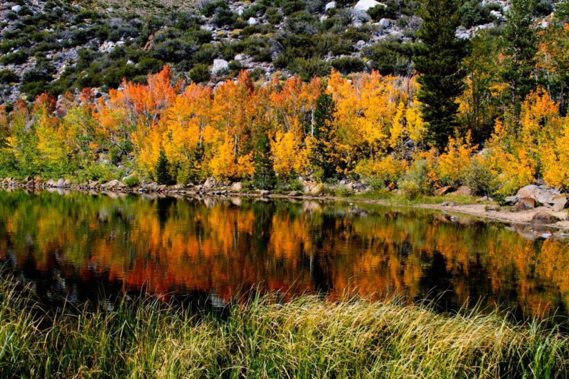 Fall Colors of the Eastern Sierra