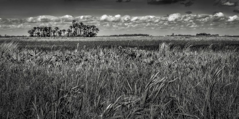 The Florida Prairie