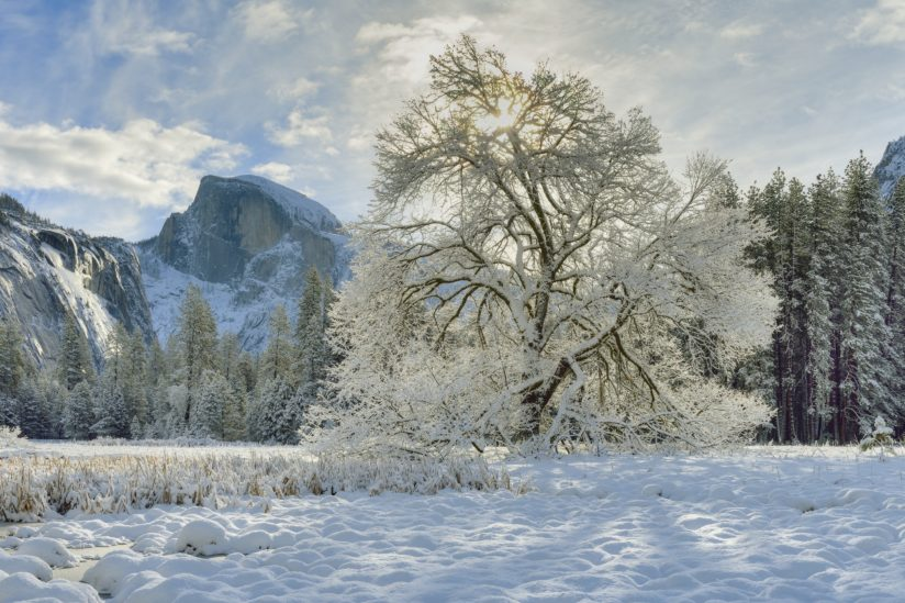 Yosemite Winter Morning