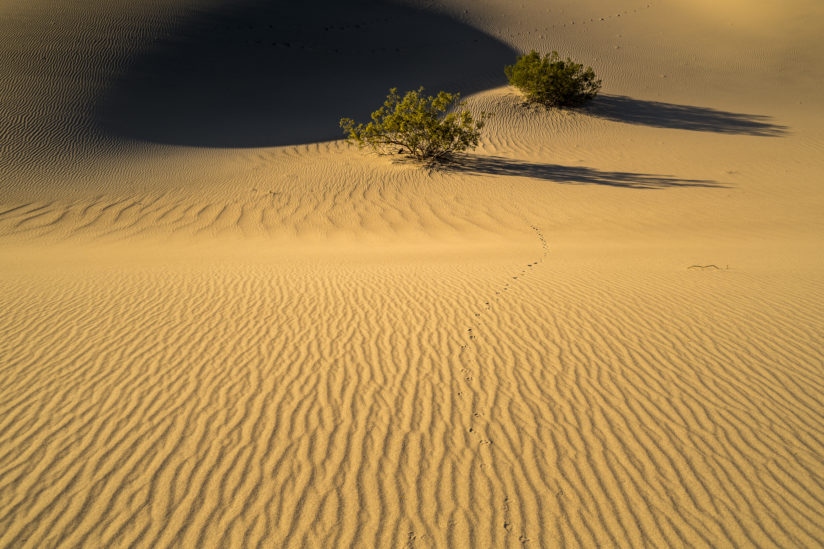 Mesquite Flat Dunes, Early Morning