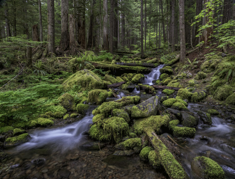 Sol Duc Falls Trail, Hoh Rainforest, Olympic National Park