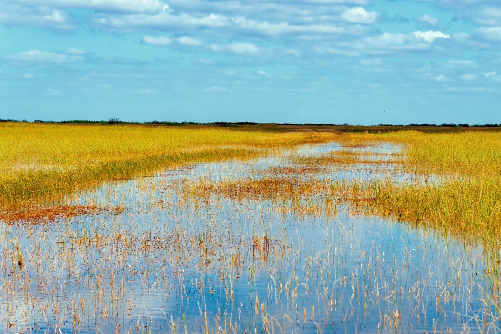 Airboating Through The Florida Everglades