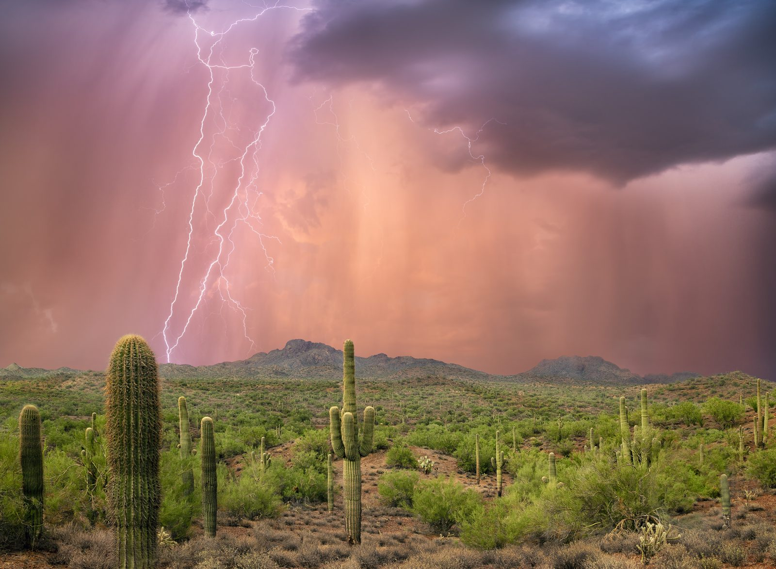 Arizona Evening Monsoon