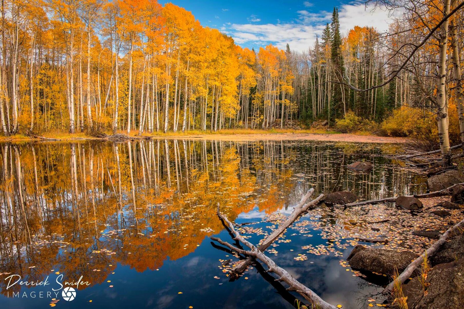 Reflecting On Fall
