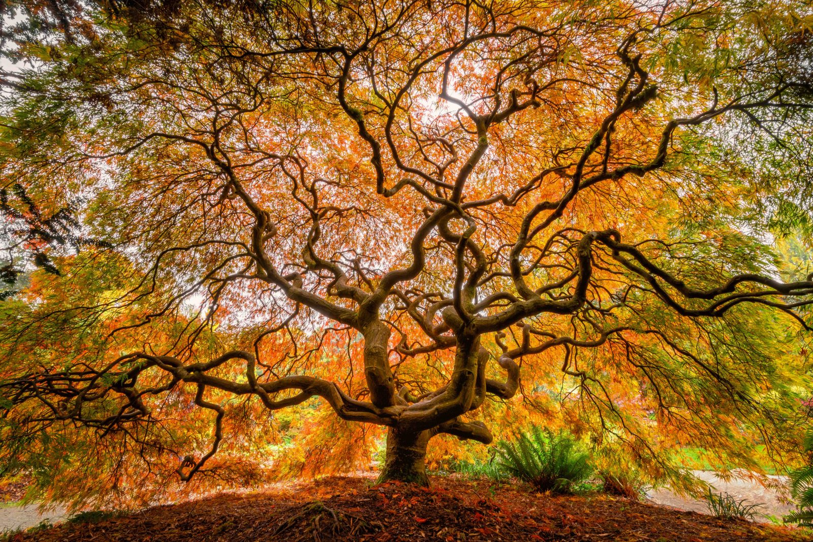 The Colors of Fall, Kubota Gardens, Seattle