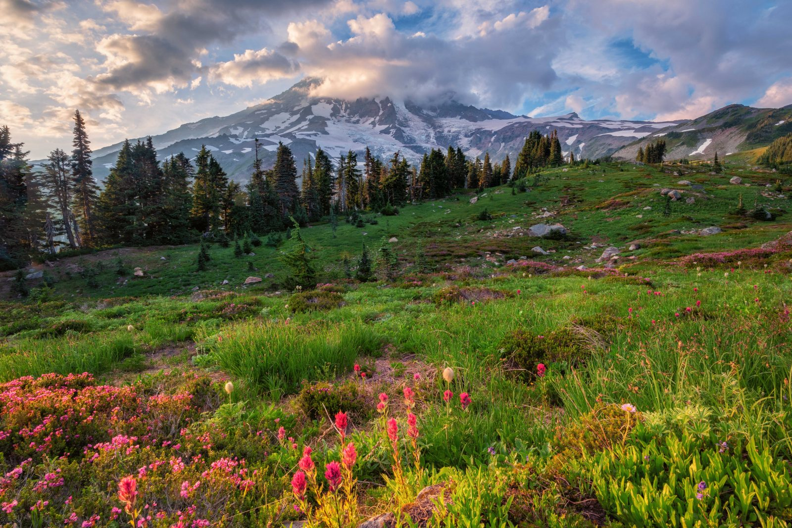 Wild Flowers of Mount Rainier