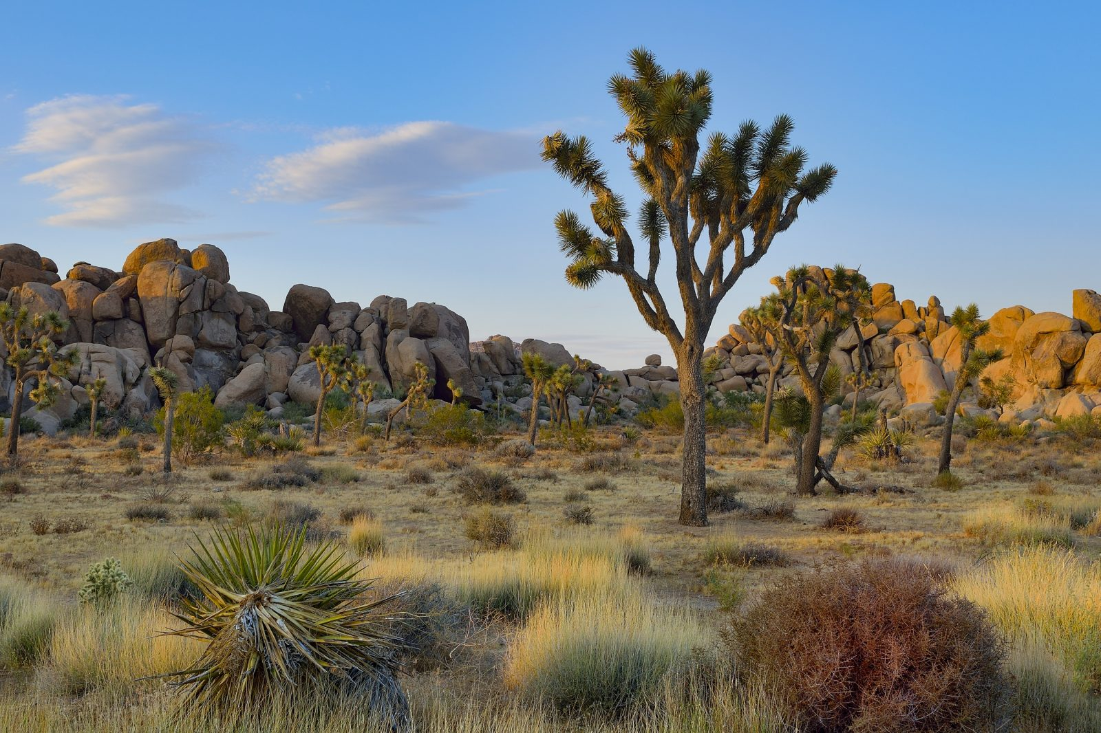 Sunset, Joshua Tree