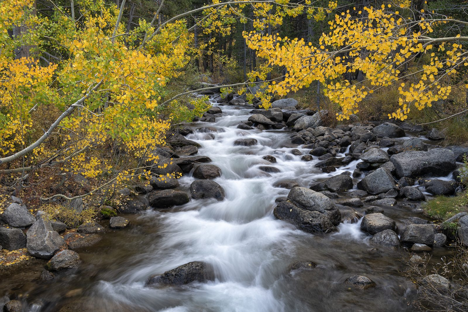 Change of Seasons, Bishop Creek, Eastern Sierra