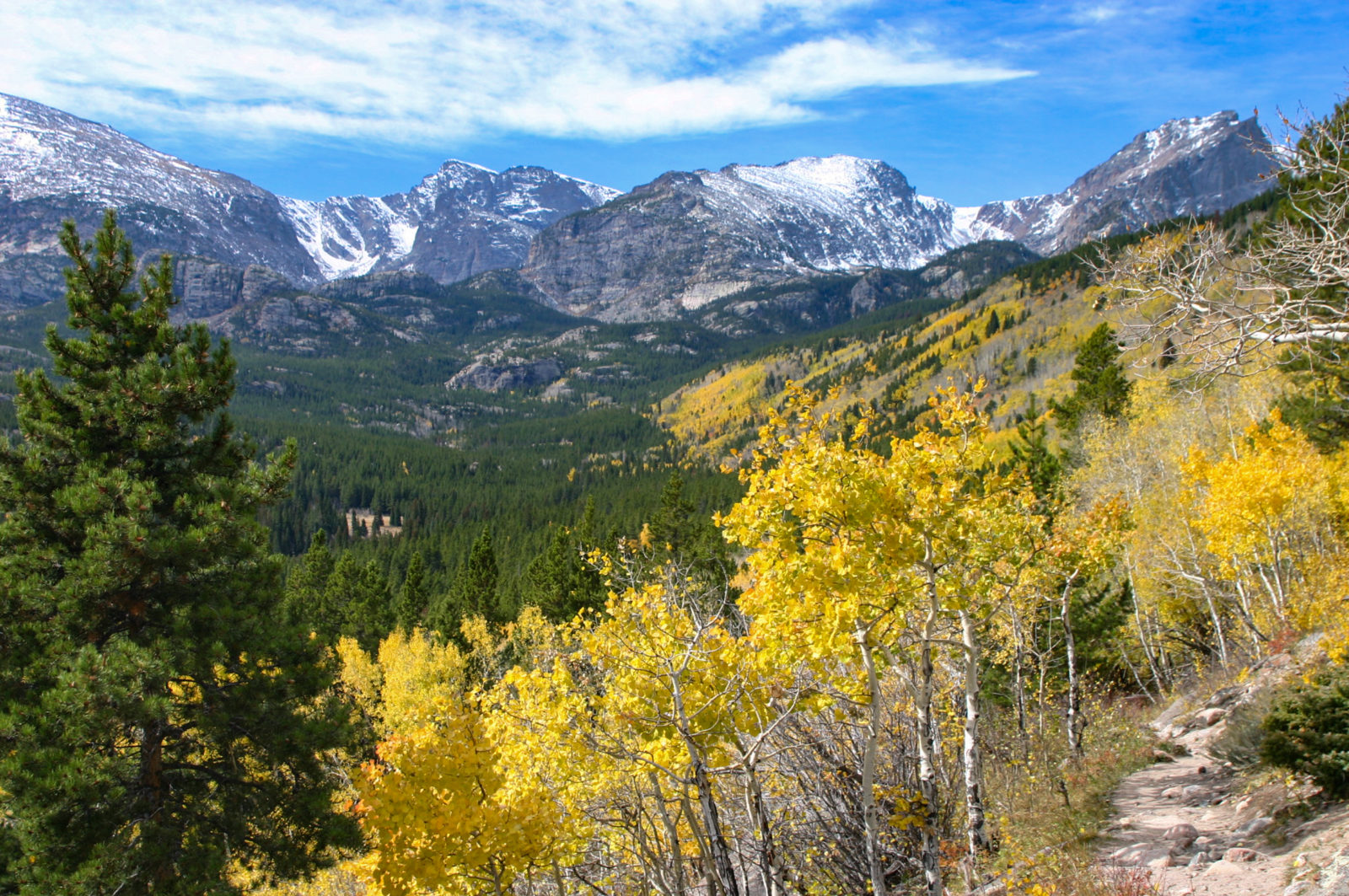 Golden Aspen in the Rocky Mountains