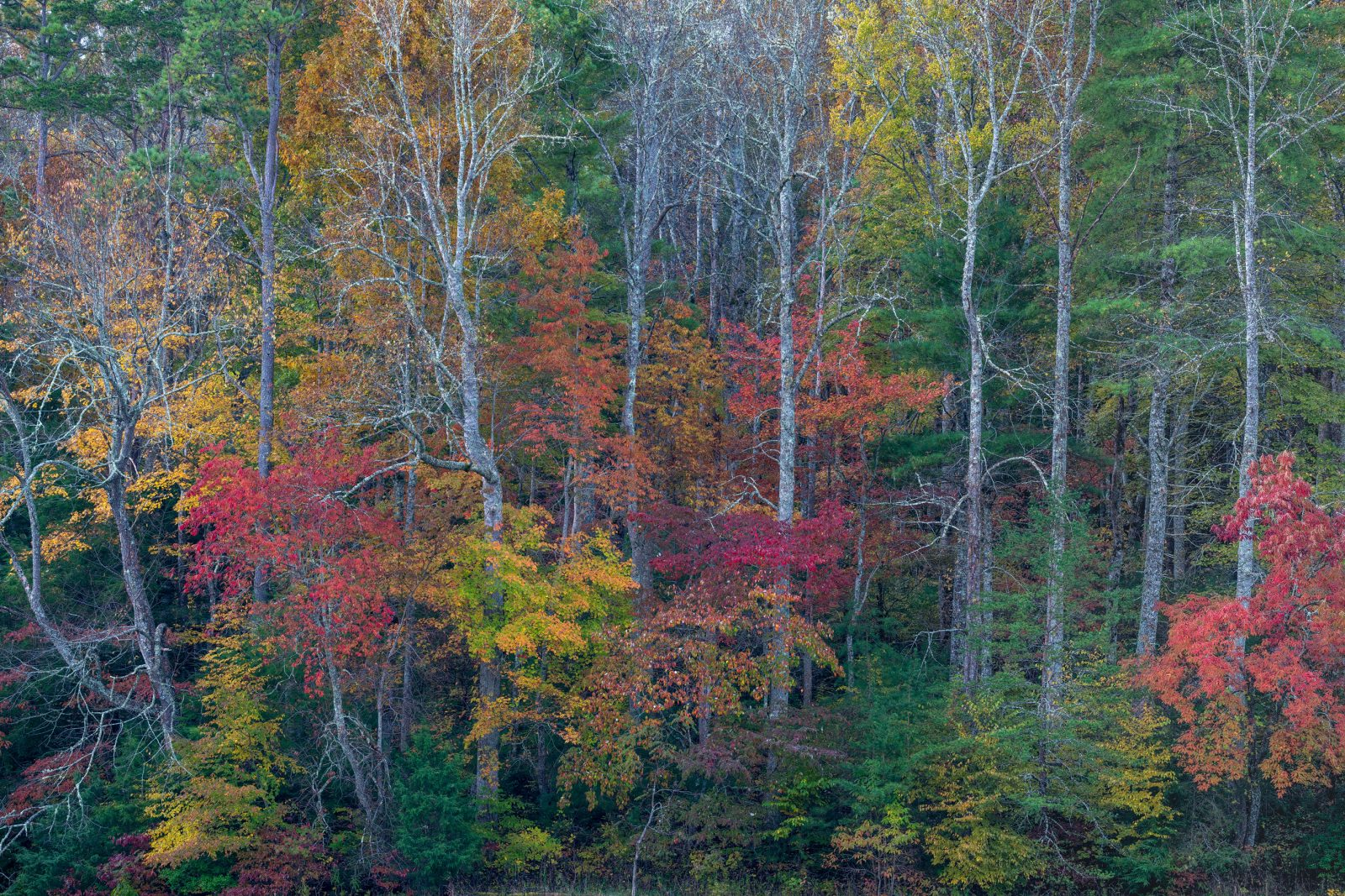 Fall Color In Cades Cove