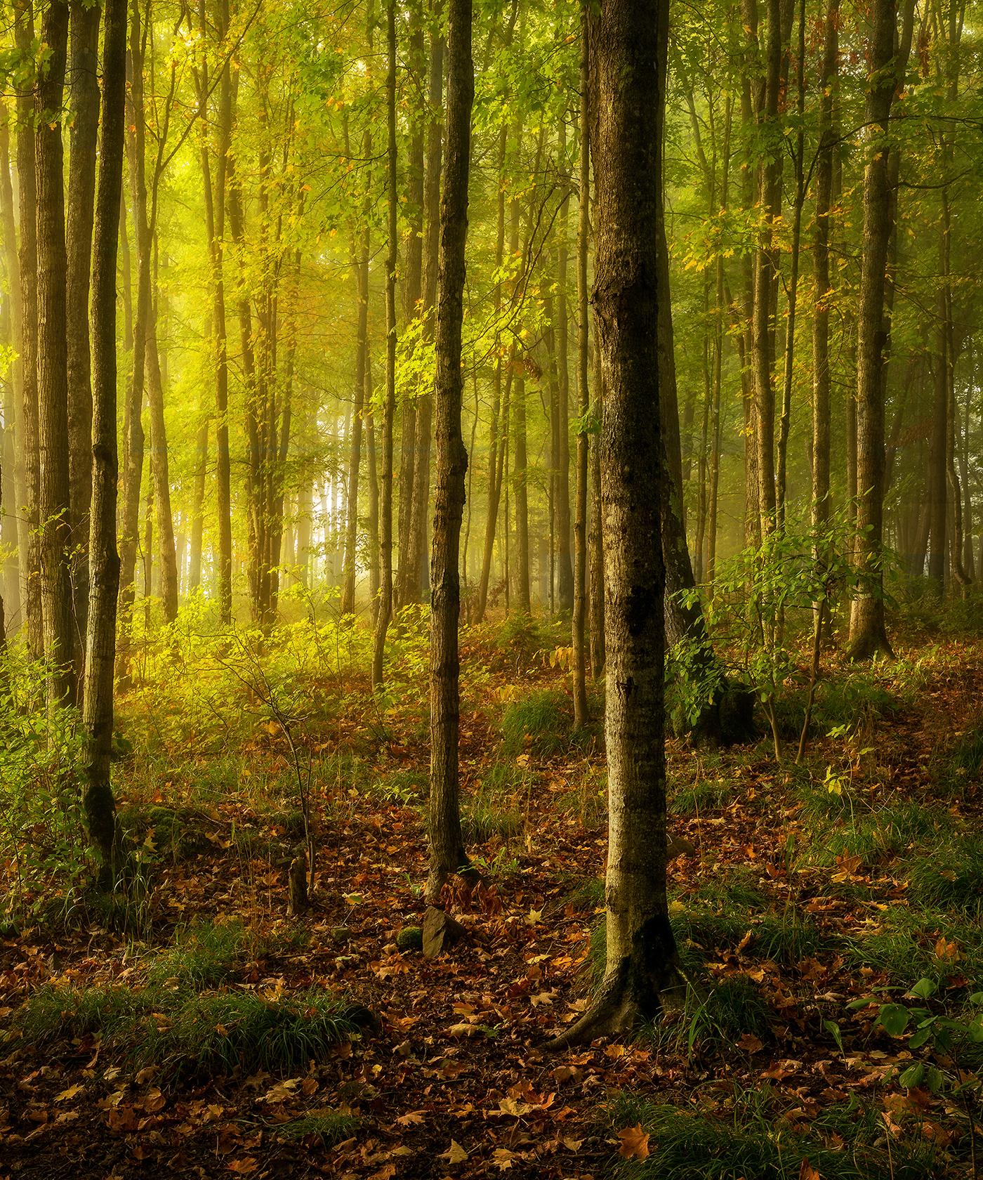 Morning Glow in the Woods
