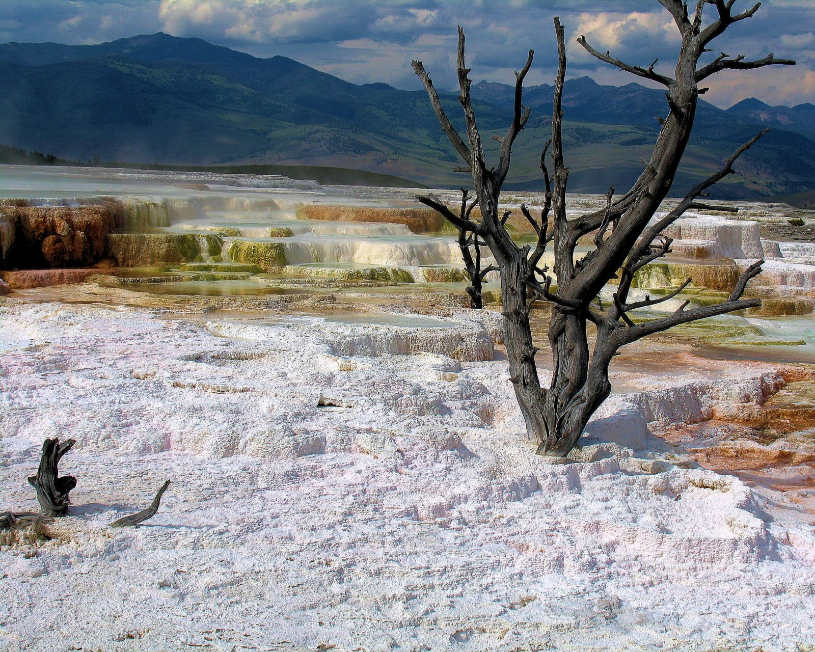 Mammoth Hotsprings Yellowstone National Park