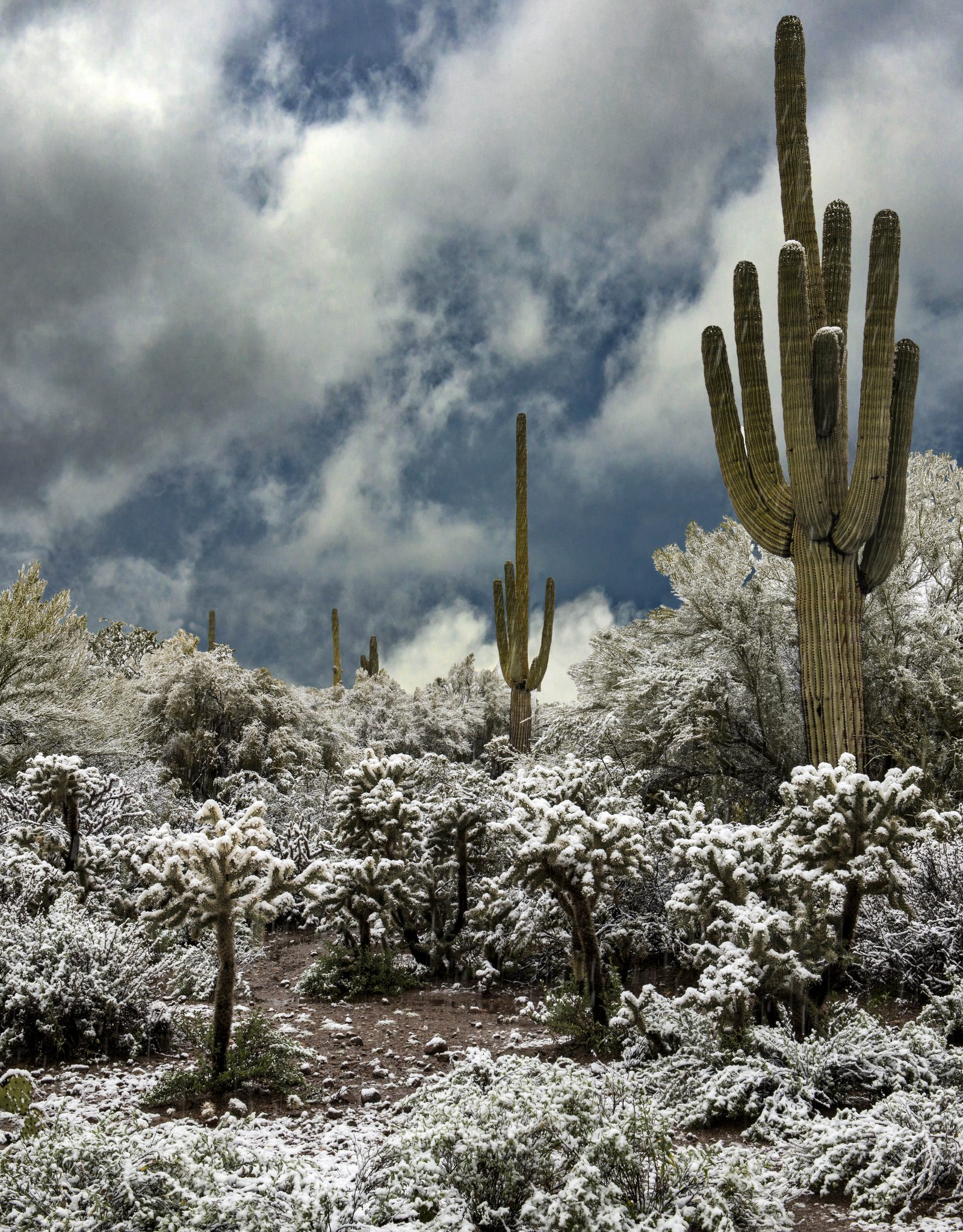 Desert Snow, Arizona