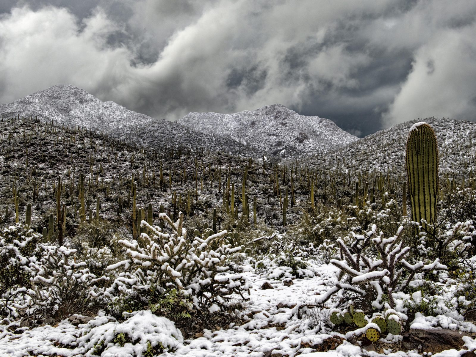 Snowfall at Saguaro National Park