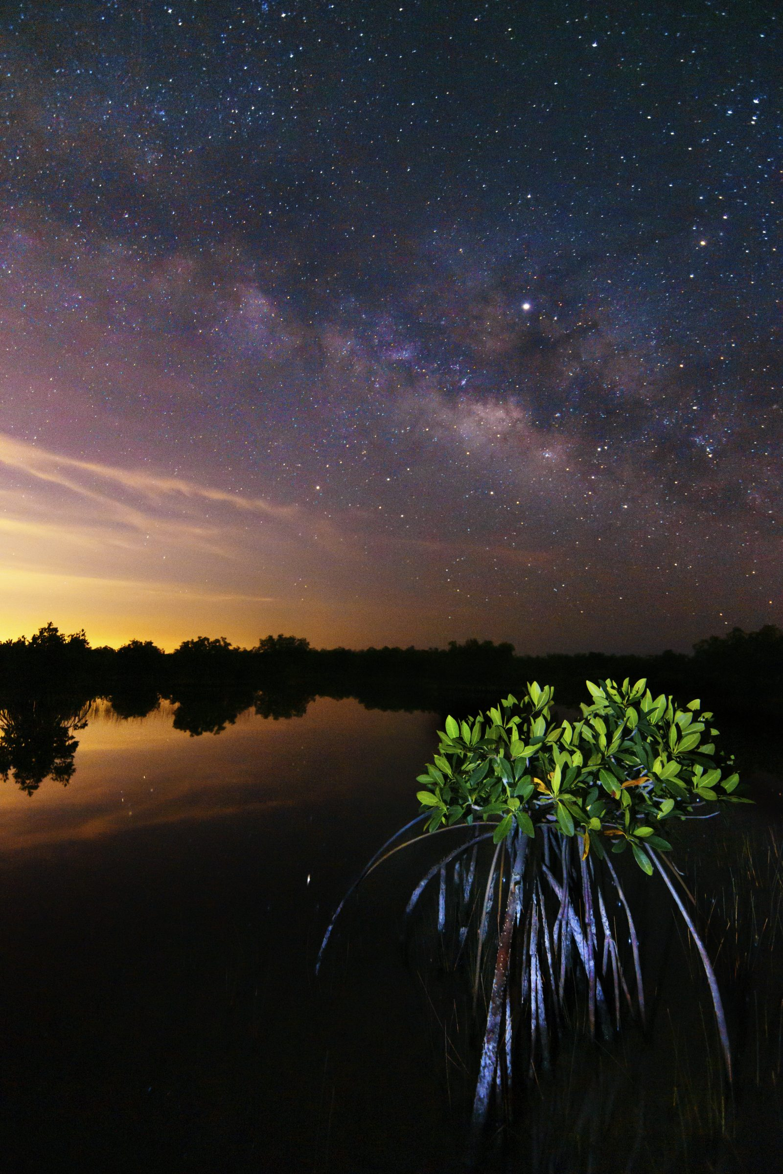 Mangrove under the Milky Way