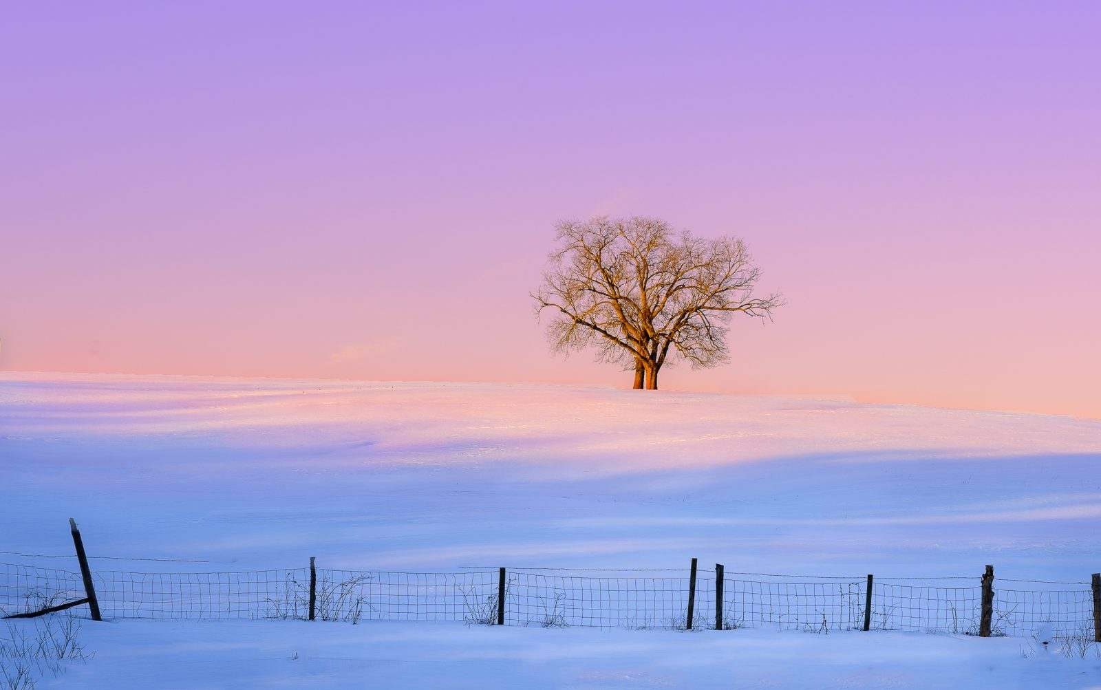 Winter Pastel Sunset