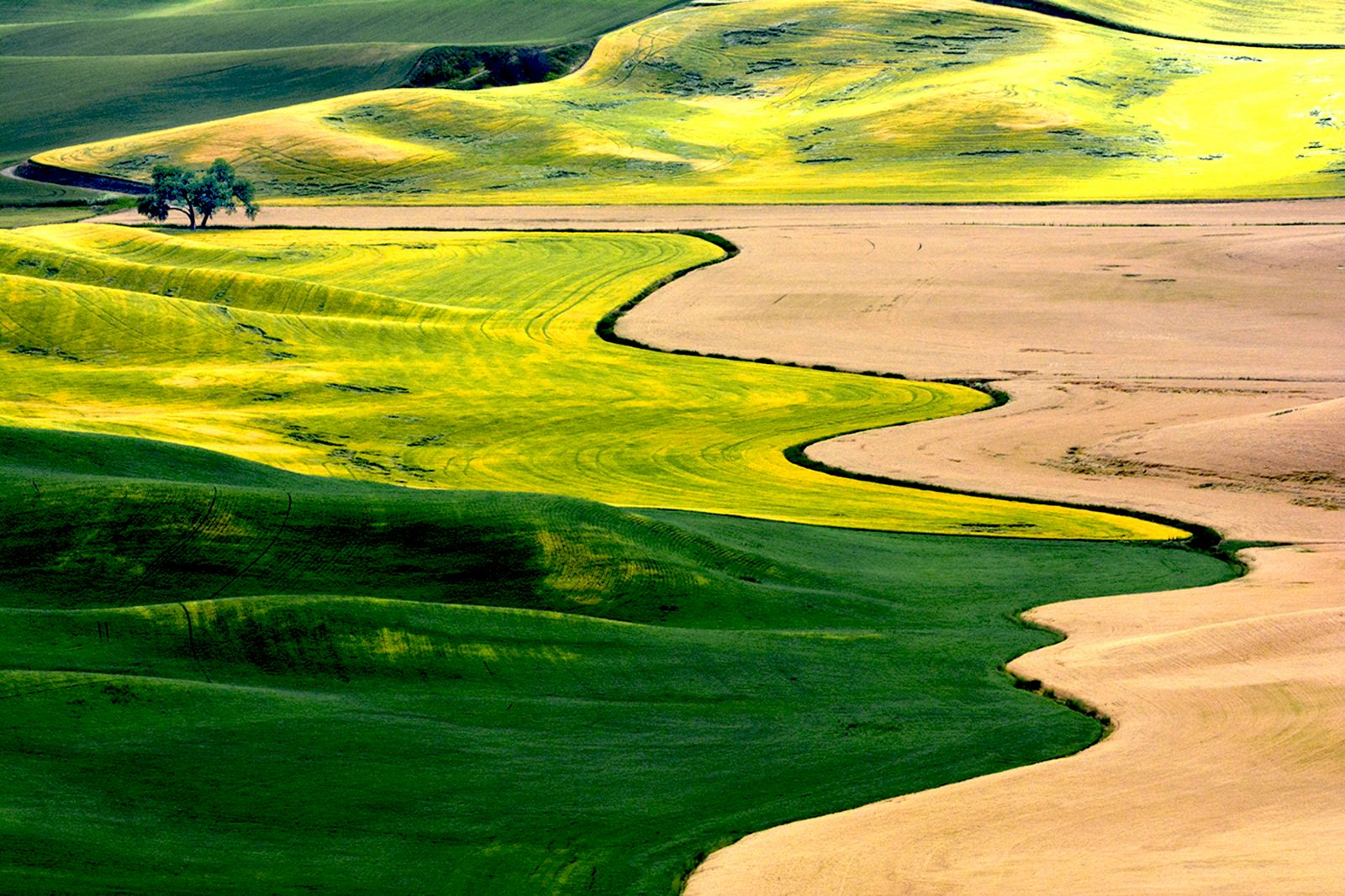 Palouse Landscape Eastern Washington
