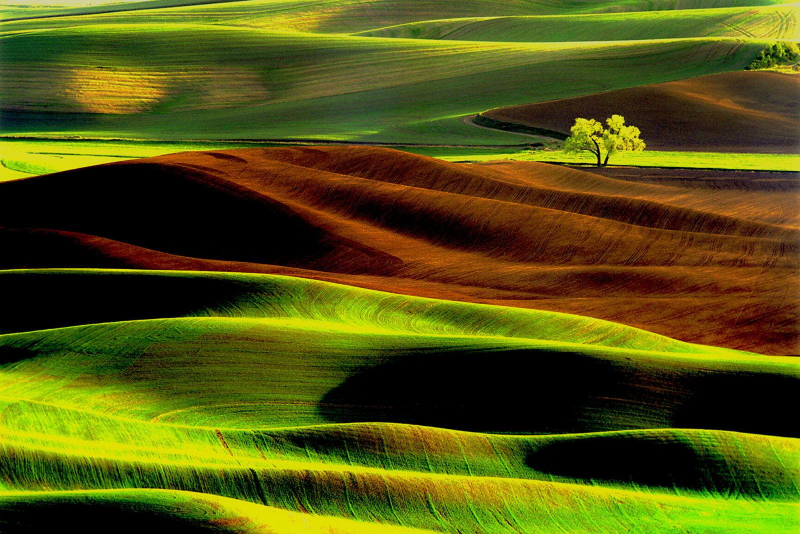 Lone Tree Palouse Region of Eastern Washington