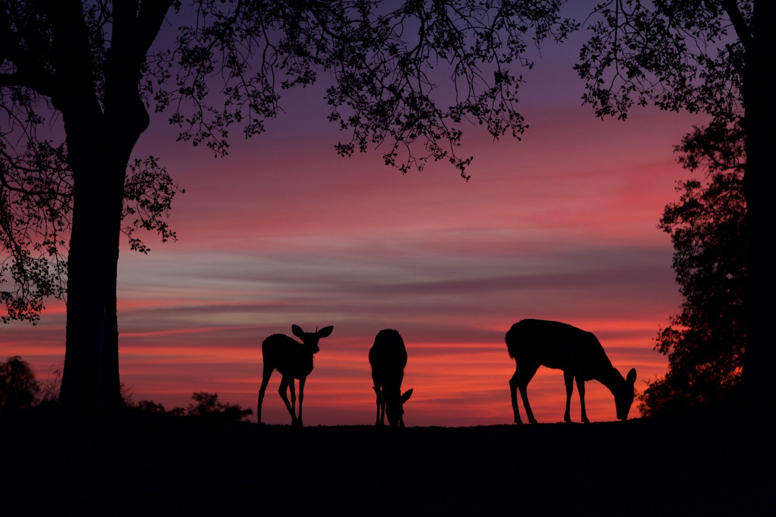 Brilliant Sunset with Silhouetted Deer