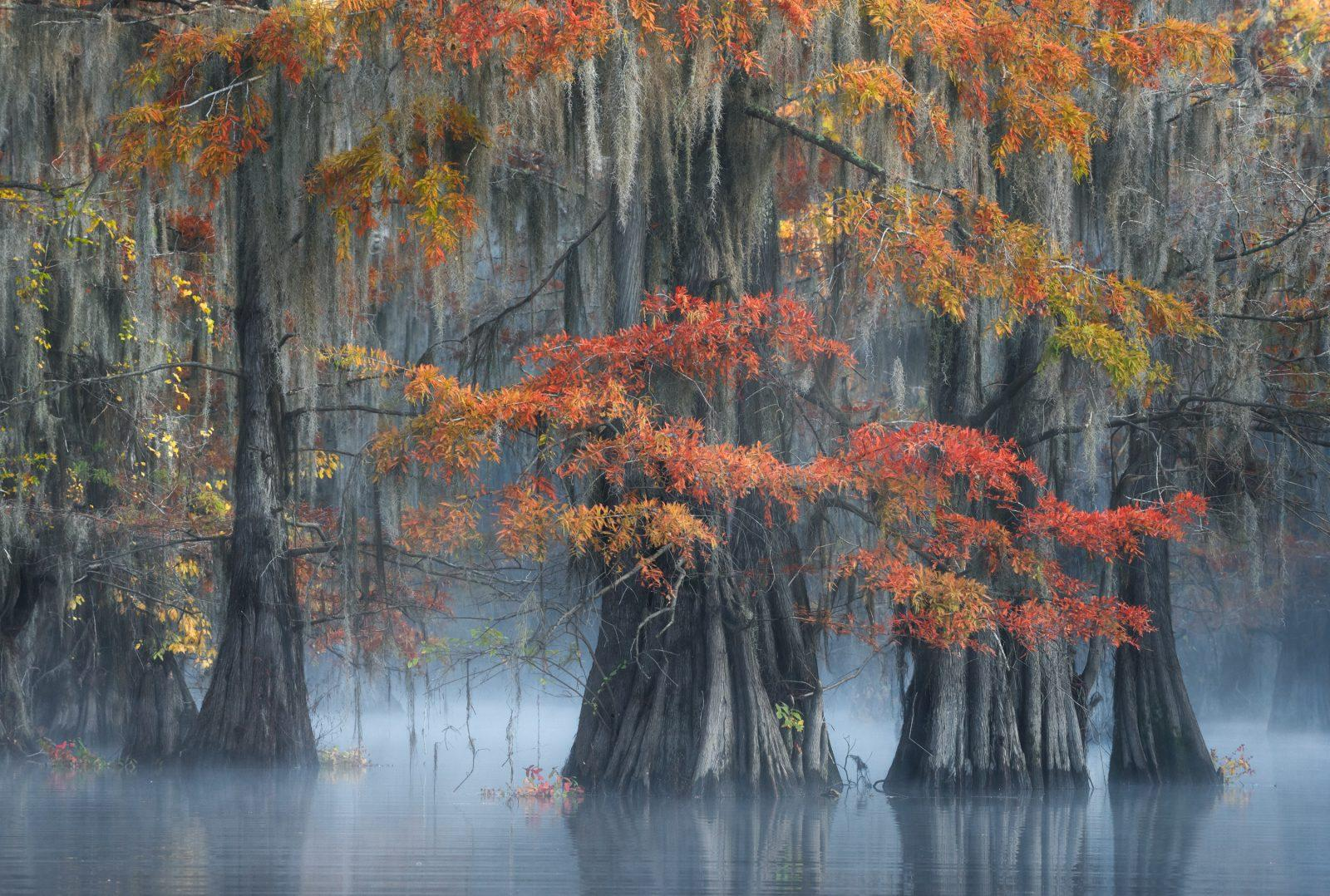 Fall Morning in the Swamp