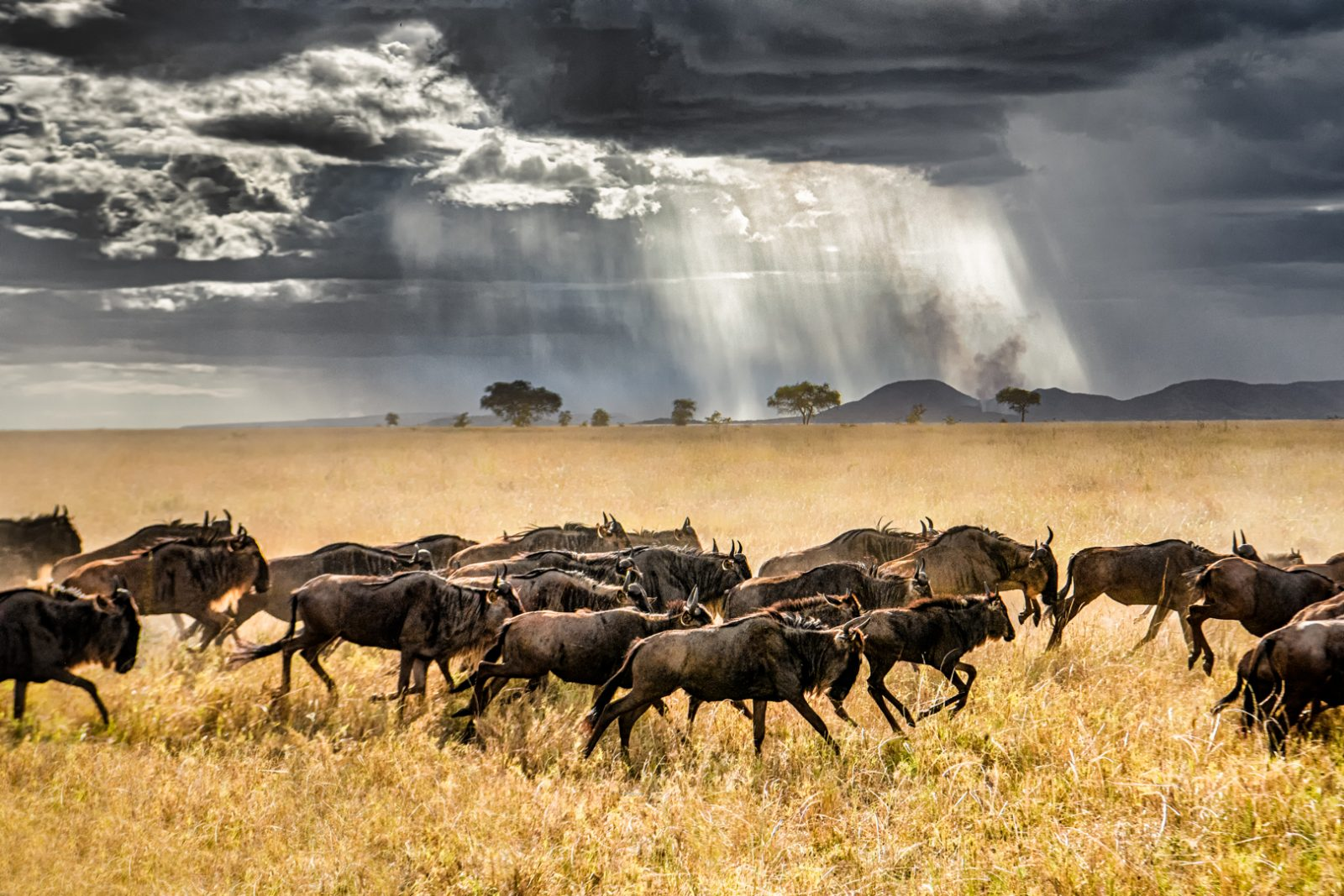 Approaching  Storm In the Serengeti