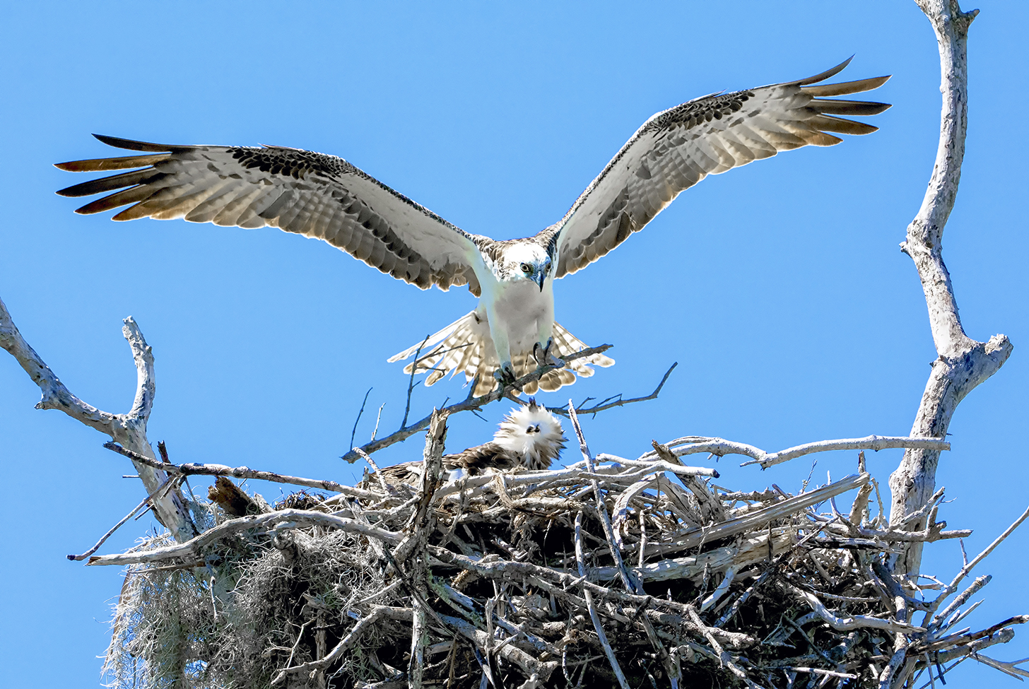 Osprey Home Improvement Everglades Florida