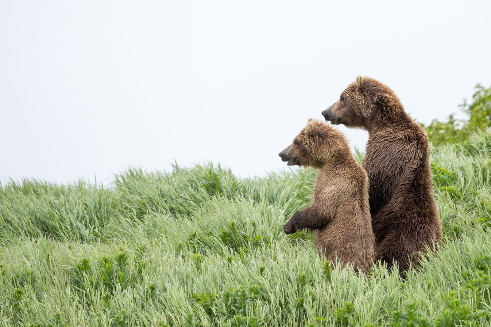 The Lookout Bears