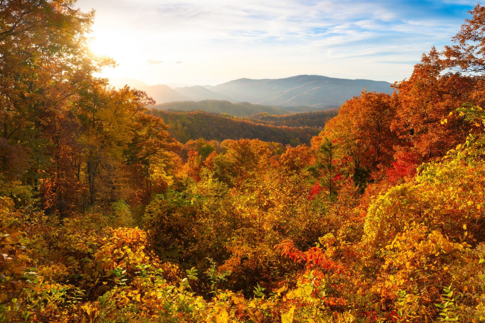 Autumn Burst In Great Smoky Mountains National Park
