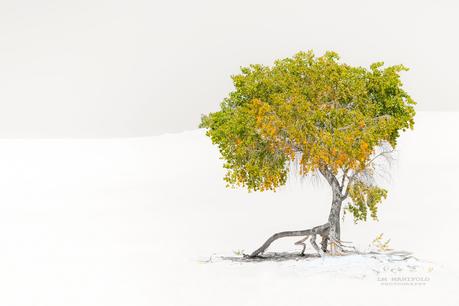 Magical Fall Colors at White Sands
