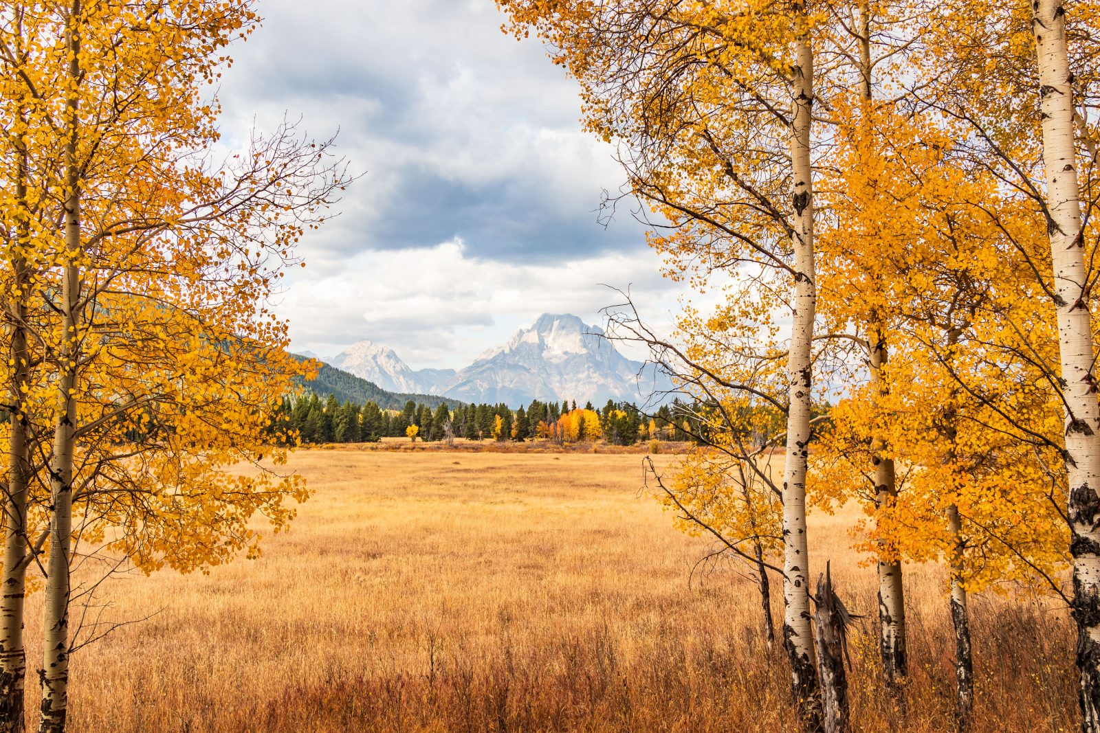 There's Gold in the Tetons